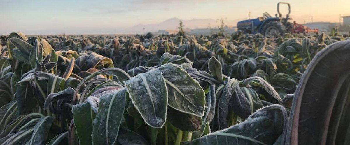 寒暖差の大きい河北町の気候は野菜や果物おいしく育ててくれます