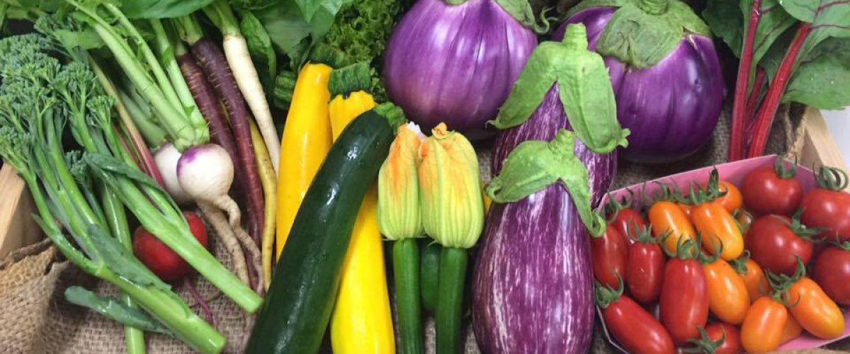最近、河北町の気候を利用して作られた「イタリア野菜」に注目が集まっています